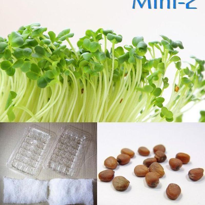 栽培クラブ 野菜 かいわれ大根 水耕栽培セット ミニ2 KS100-751q