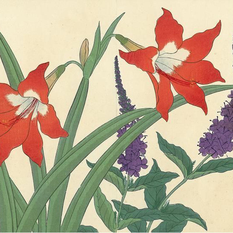 花の木版画「金山慈姑(アマリリス) 虎の尾」(額付)明治41年刷り