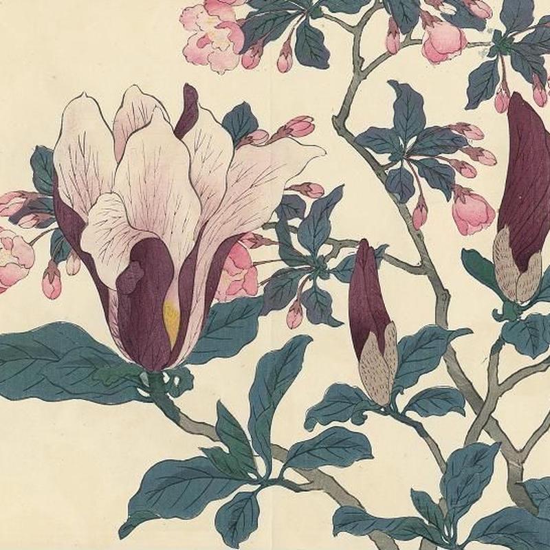花の木版画「海棠」(額付) 明治41年刷り