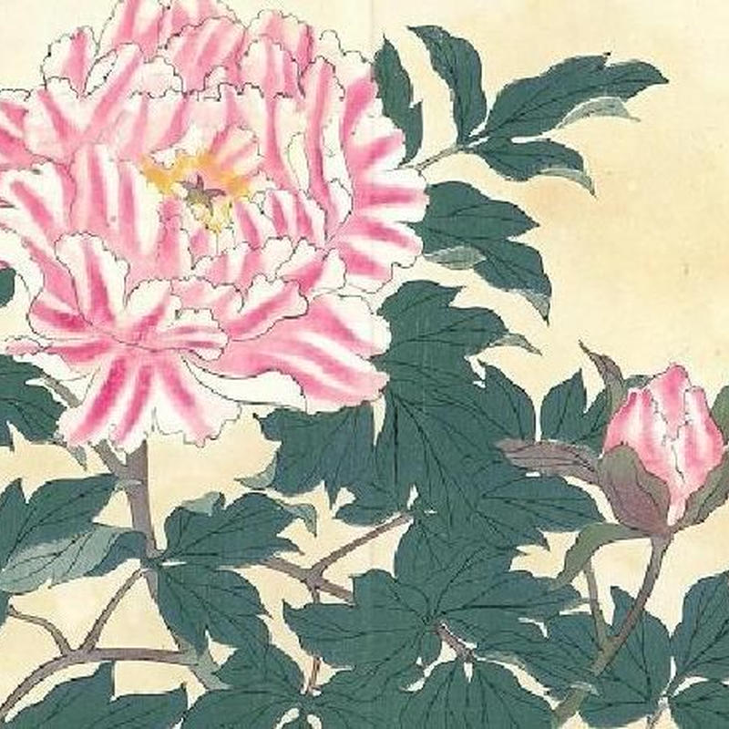 花の木版画「牡丹」(額付) 明治41年刷り