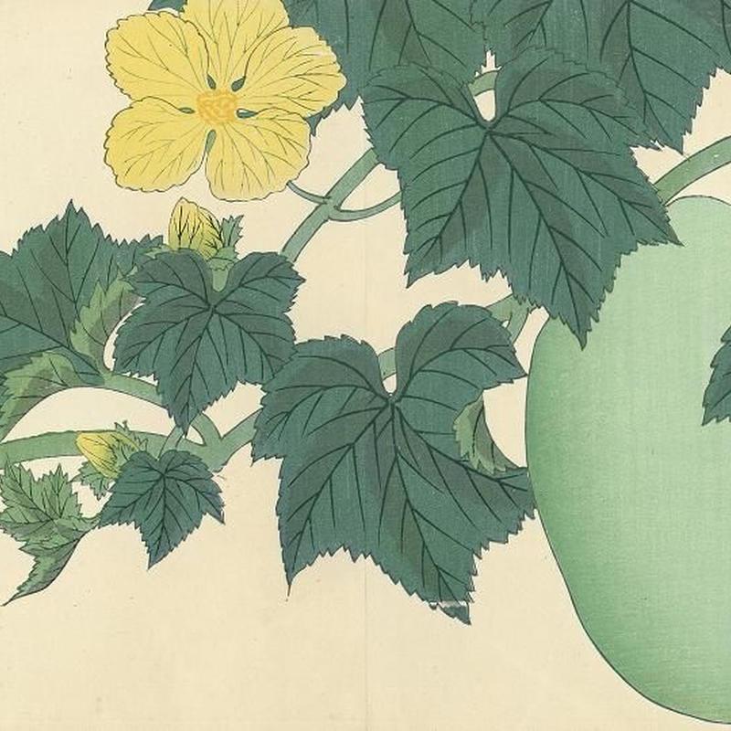 花の木版画「冬瓜」(額付)明治41年刷り