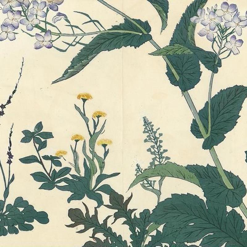 花の木版画「春の七草」(額付) 明治41年刷り