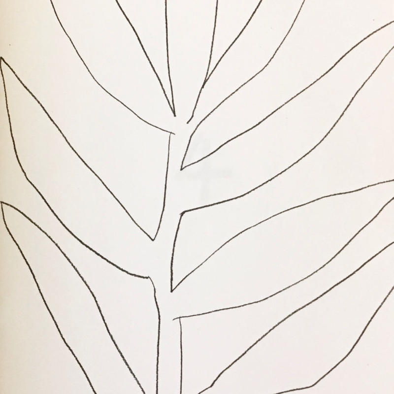DESSIN 第4号 CONTOUR from 'CONTOUR' / Sakurako Oidaira