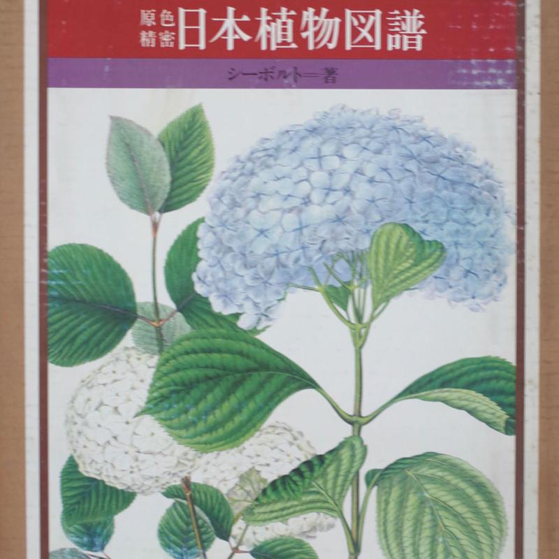 シーボルト・フロラ・ヤポニカ 原色精密 日本植物図譜
