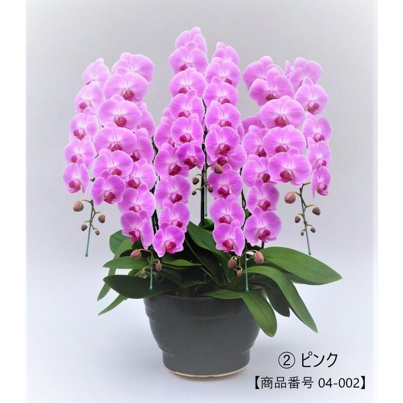 ★ハイグレード★ 大輪胡蝶蘭  5本立て   =ピンク=