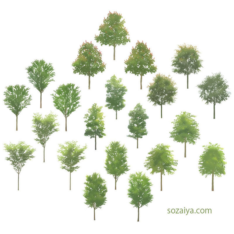 樹木イラスト 4e_002