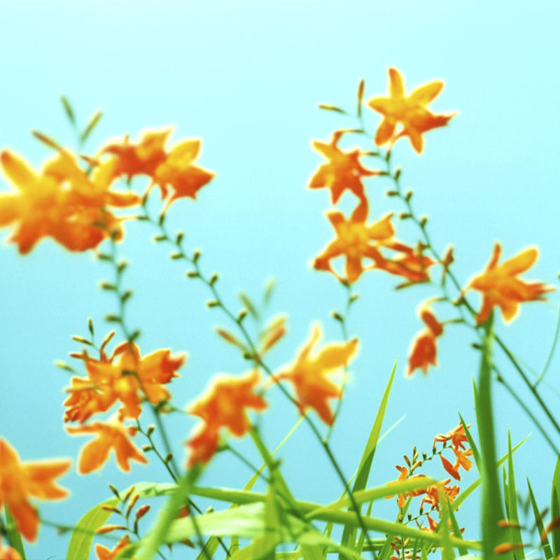 PHOTO TILE STICKER orange