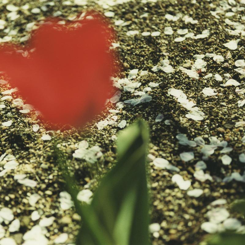 PHOTO TILE STICKER  tulip