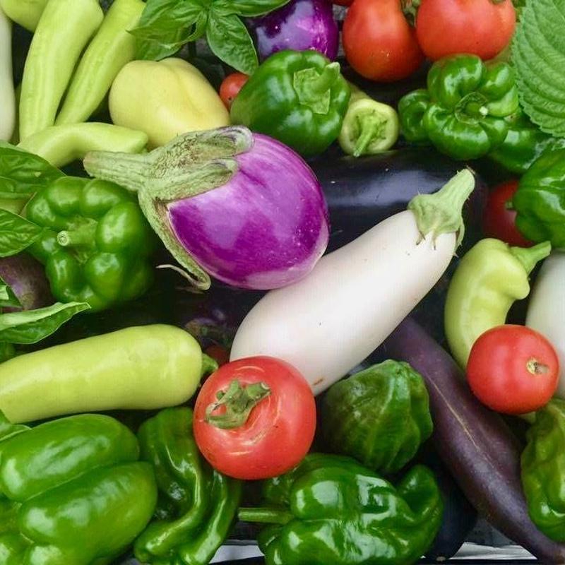 【定期おトク便:月3回】無農薬 野菜セット  (税、送料、夏季クール便代込み)