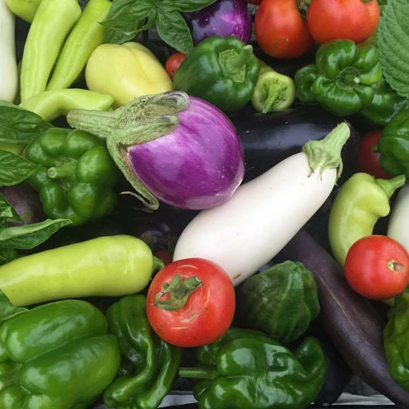 【定期便:月2回】無農薬 野菜セット  (税、送料、夏季クール便代込み)