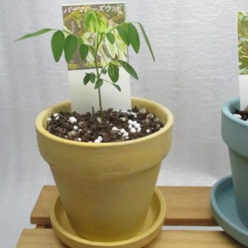 素焼き鉢植え替え発送オプション