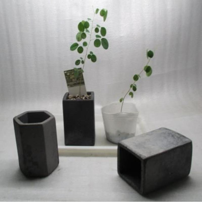 黒信楽焼きM鉢植え替えオプション