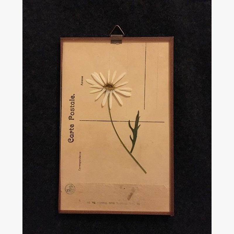 マッチポイントの植物採集カード(マーガレット)