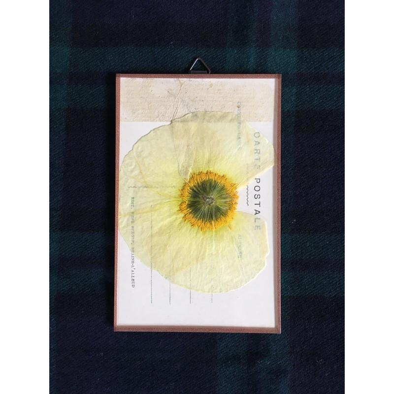 マッチポイントの植物採集カード(ポピー)