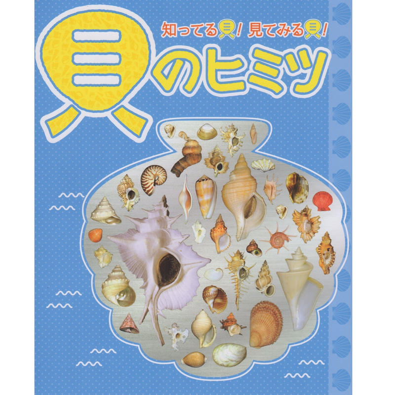 図録「知ってる貝!見てみる貝!貝のヒミツ」