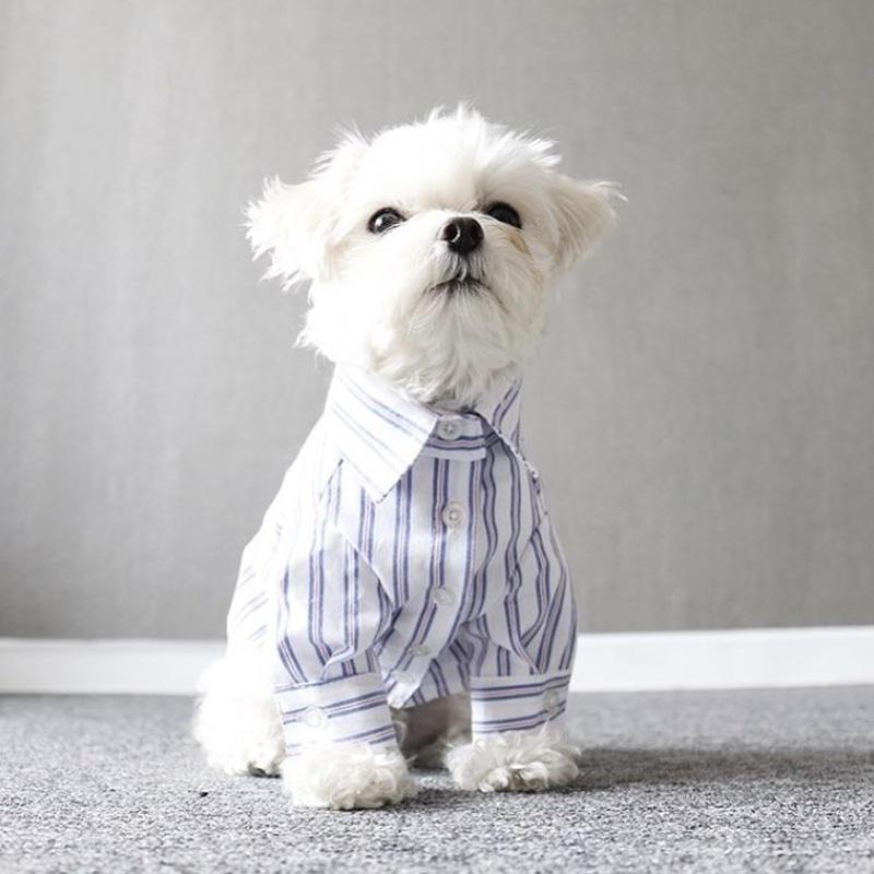 mulch stripe shirt . [ white ]