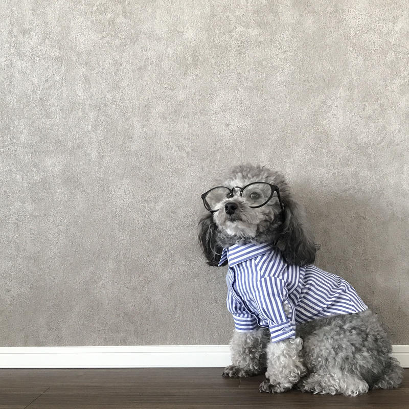 stripe shirt . [ blue ]