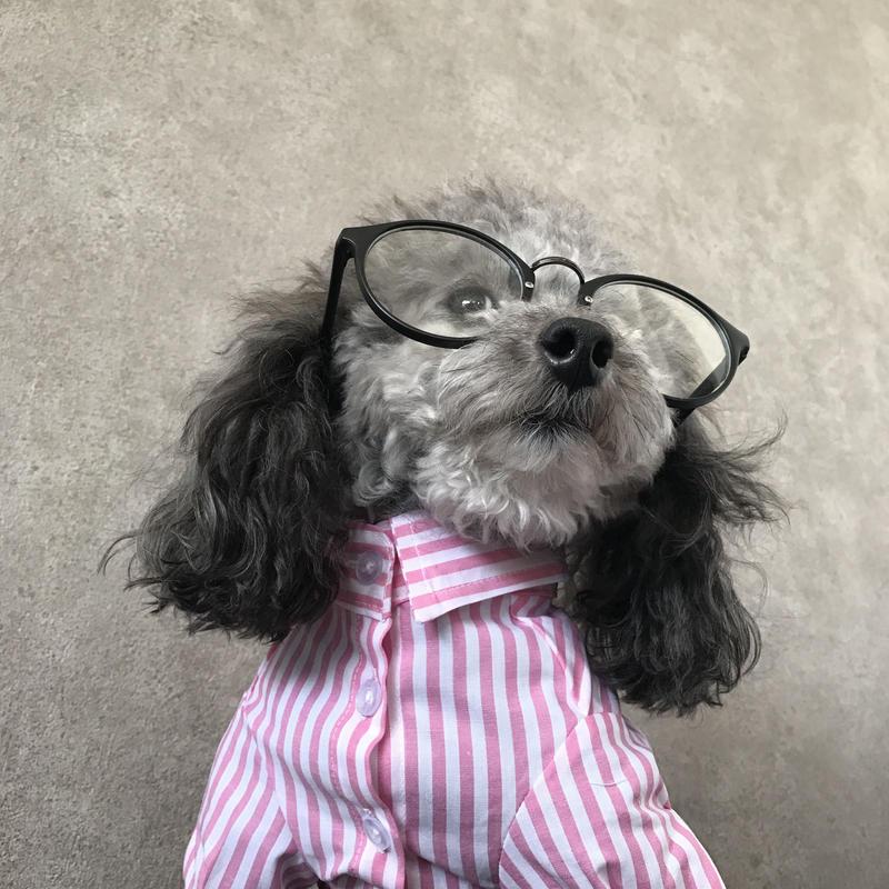 stripe shirt . [ pink ]