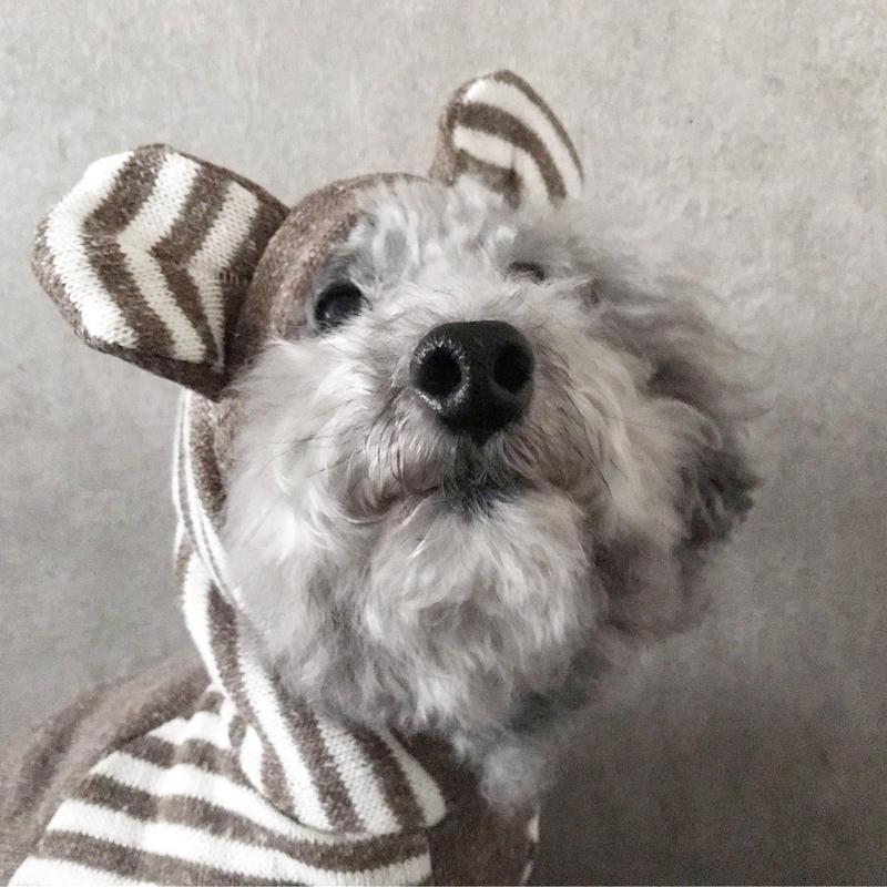 ORIGINAL raglan bear  hoodie . [ brown L , XL ]