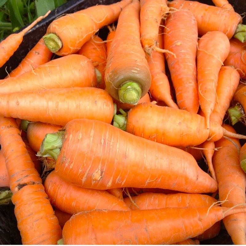 自然農(無農薬・無肥料・不耕起) にんじん 1kg (〜5kg購入可)   [BIG FAMILY FARM] made in 佐賀県