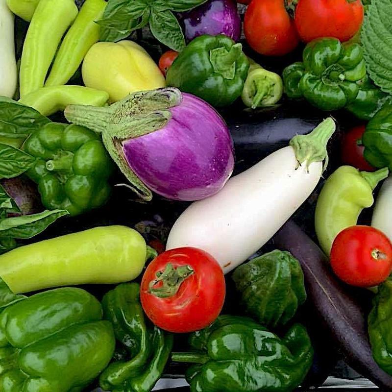 江戸循環農法(無農薬・無化学肥料) 旬の野菜セット[MARU FARM] made in 静岡県