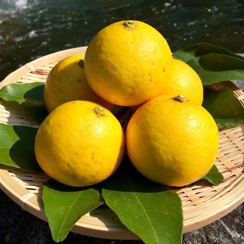 自然栽培(無農薬・無肥料) 夏空の小夏 5kg [潮と空農園] made in 高知県