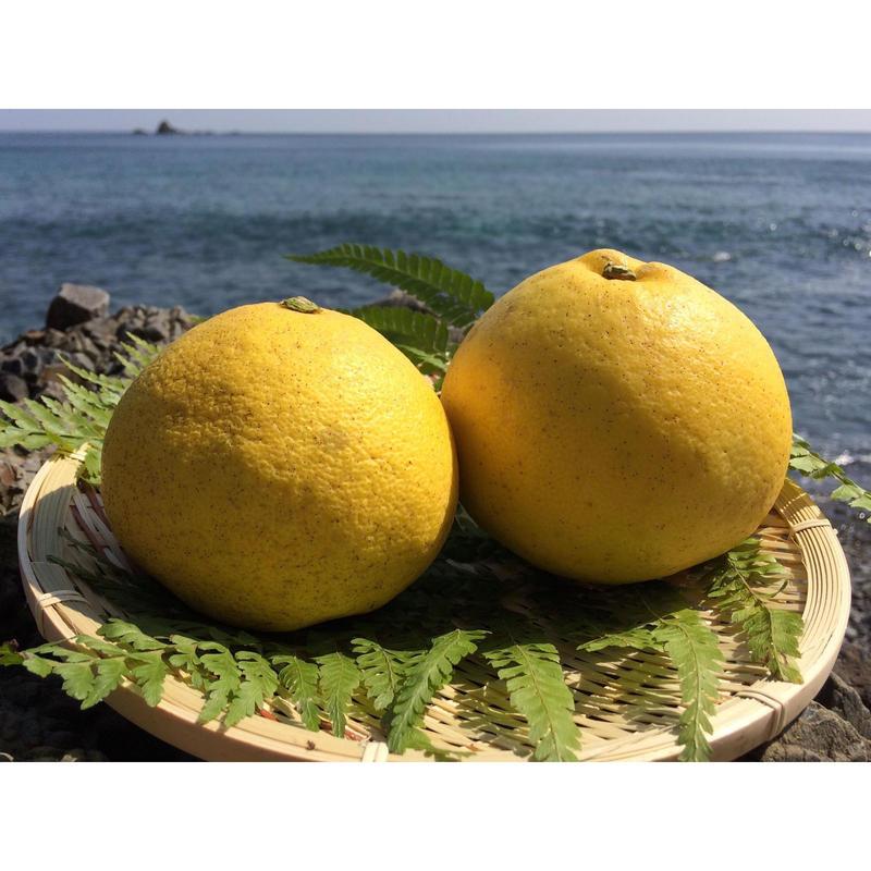 自然栽培(無農薬・無肥料) お日様の文旦 3kg[潮と空農園] made in 高知県