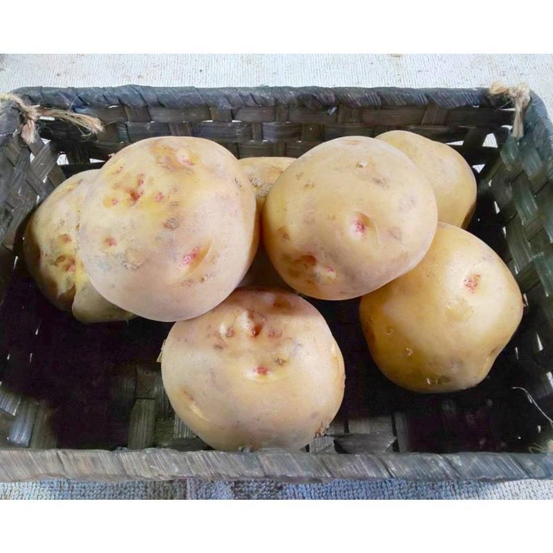 炭素循環農法(無農薬・無化学肥料) ジャガイモ《キタアカリ》1kg(〜10kg購入可)[クルンノウエン] made in 熊本県