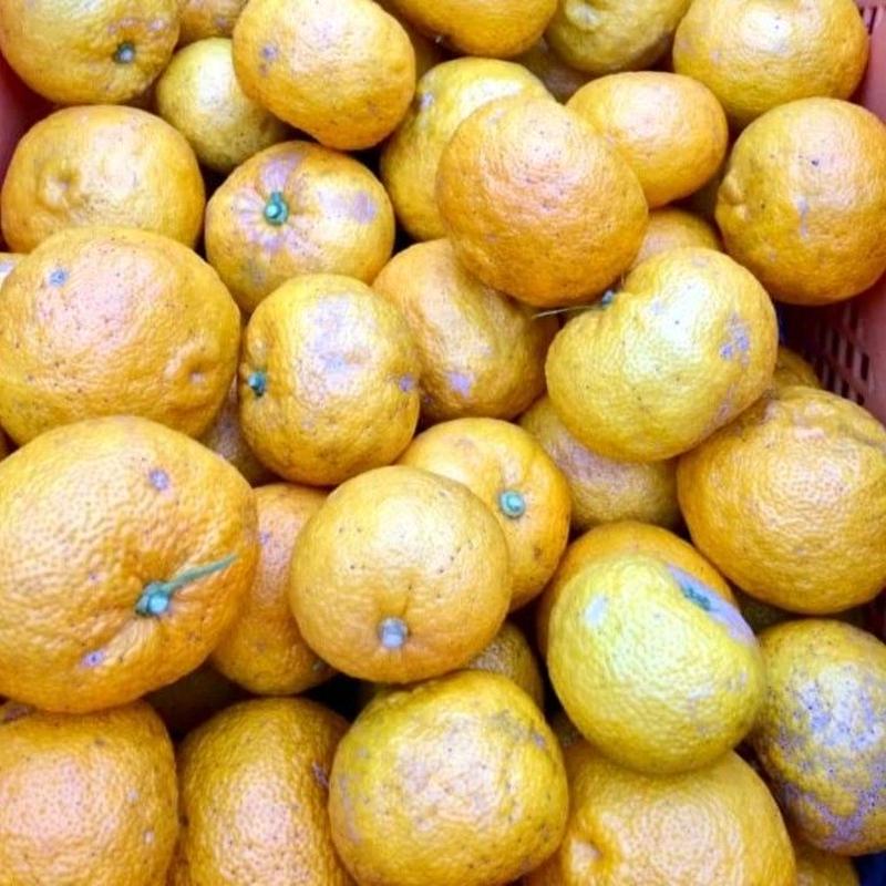自然農法(無農薬・無化学肥料) 星空の柚子 30個 [潮と空農園] made in 高知県