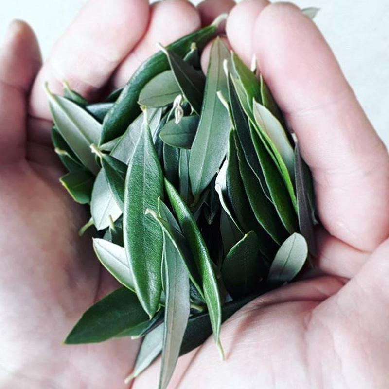 無農薬無化学肥料栽培 オリーブリーフティー「ピュア」[Enshu Olives] made in 静岡県