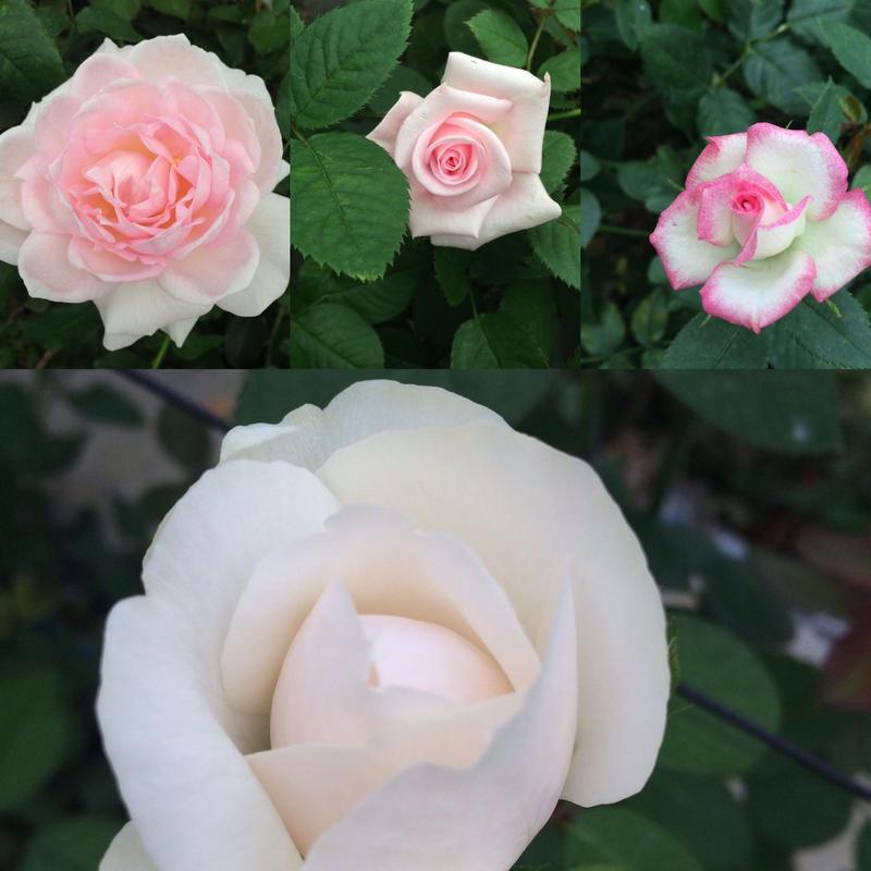 花開く春分オーラスプレー