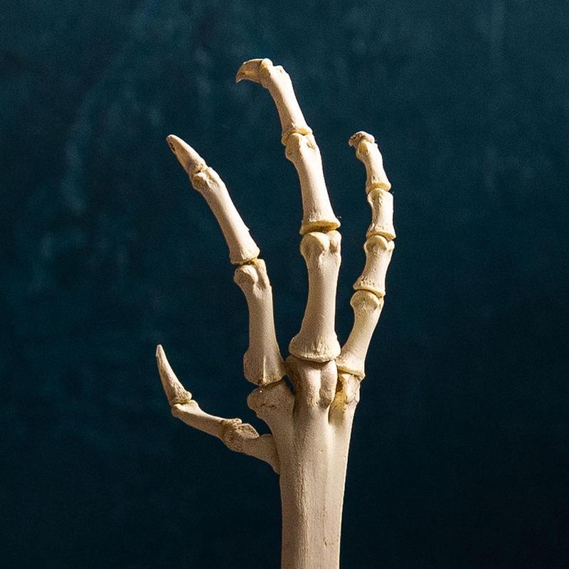 Bird skeletal specimen -鶏足の骨格標本- 右脚