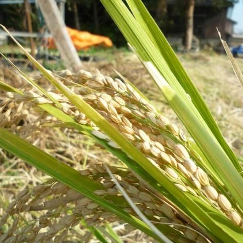 【2018年新米】  うきは産 農薬不使用・ 無肥料・自然米 ひのひかり【玄米】10kg
