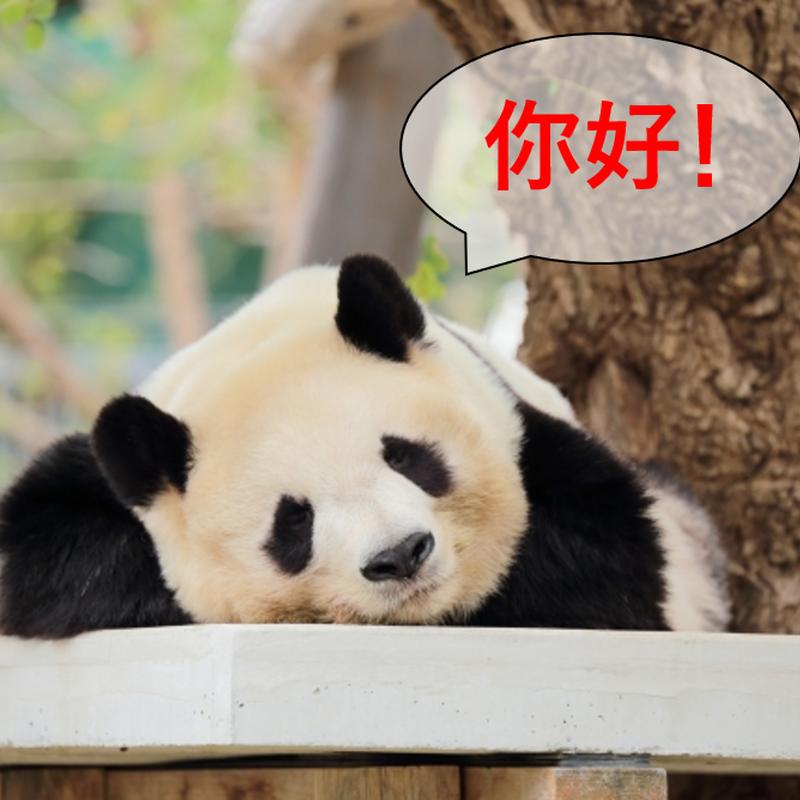 中国語個別指導
