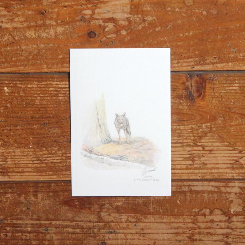 Coyote(ポストカード)