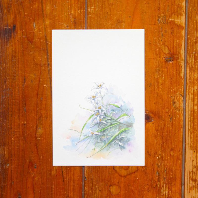 朝露に濡れる花