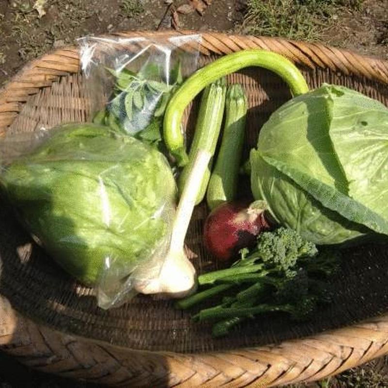 化学肥料、農薬を使わずに育てた旬の野菜 お試しセット