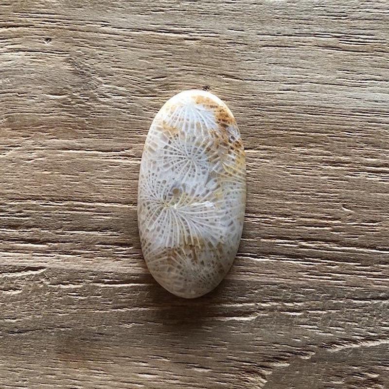 フォッシルコーラル(No.11)/天然石ルース(裸石)