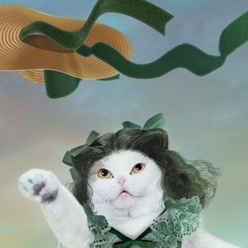 猫託ポストカード「明日は明日の風が吹く」2枚セット