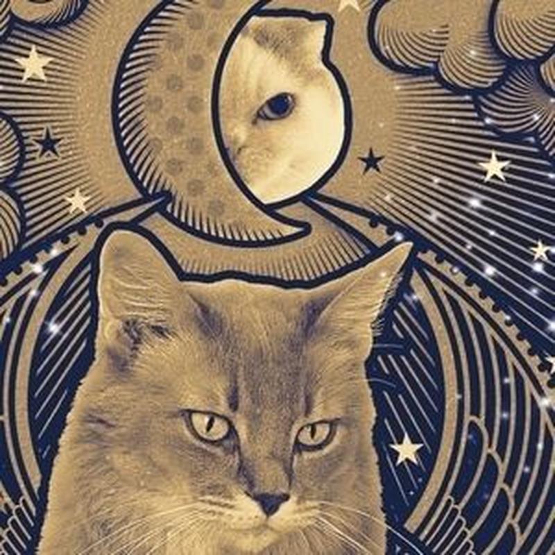 猫託ポストカード「運否天賦」2枚セット