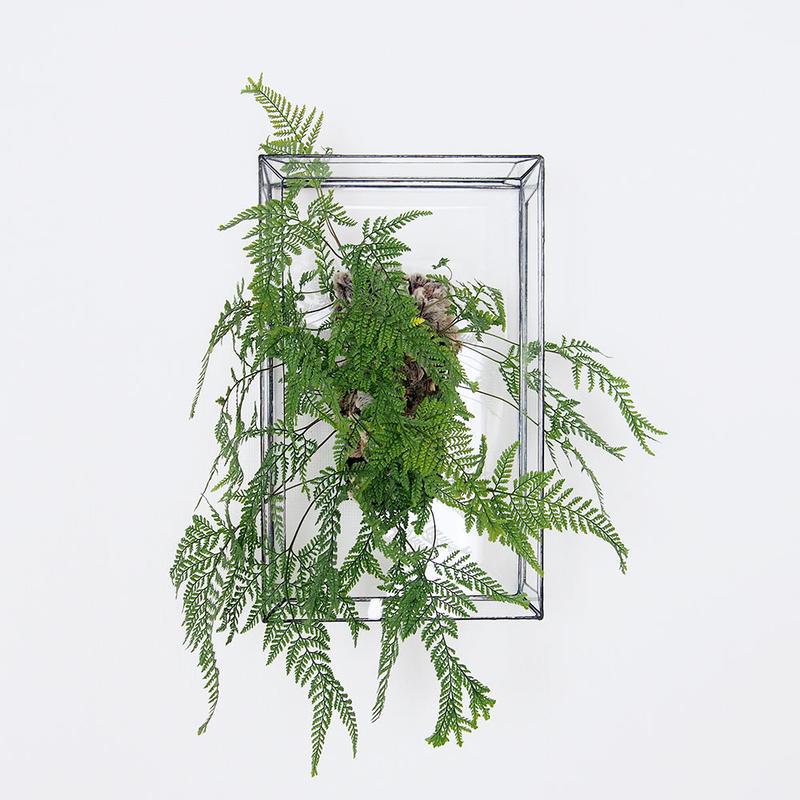 「ガラスと着生植物」Humata tyermannii