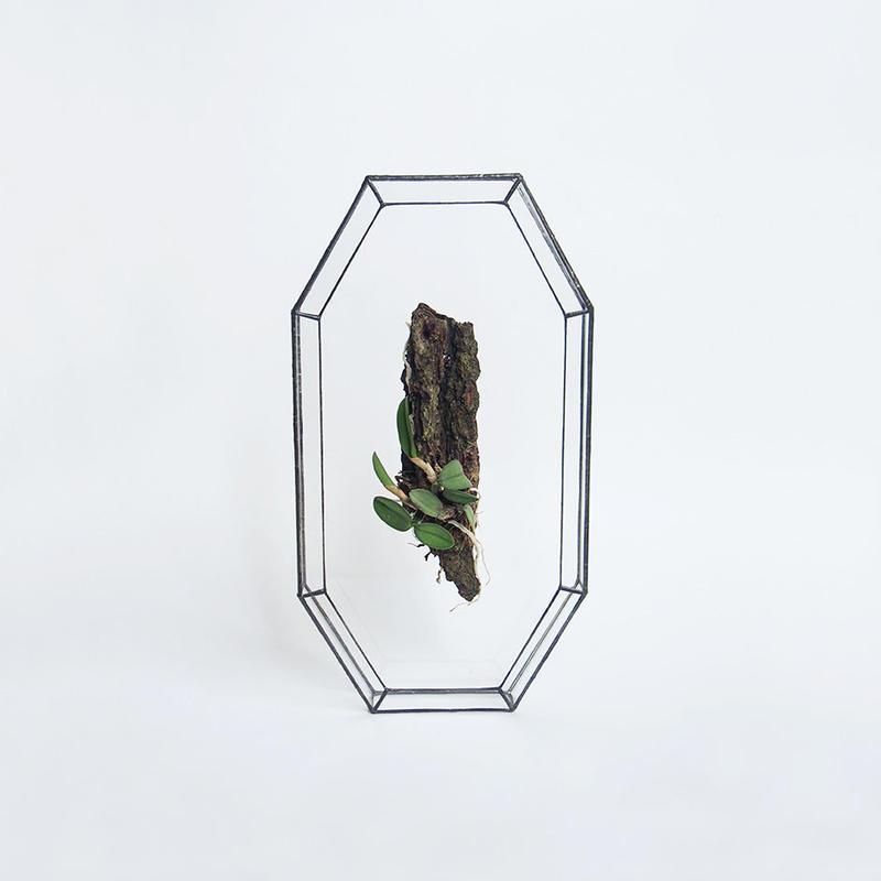「ガラスと着生植物」Cattleya cernua