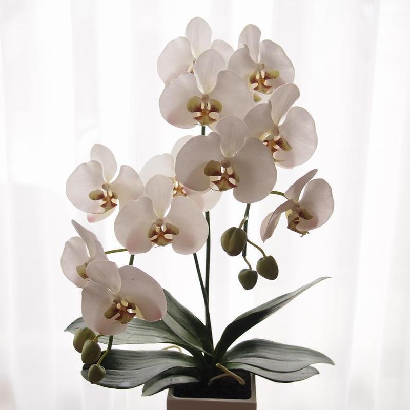 TioTio Flower 胡蝶蘭2本立て(完成品のみ)