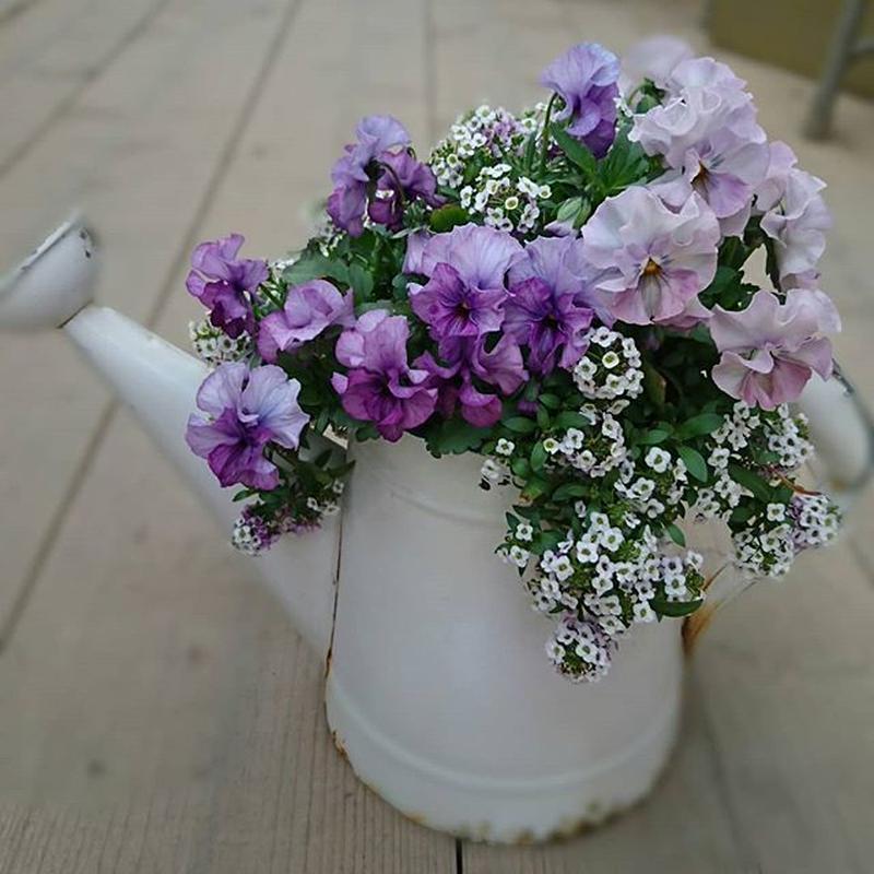 Purple potの寄せ植え