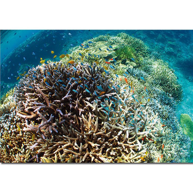 石垣島のうみのなか ポストカード サンゴ