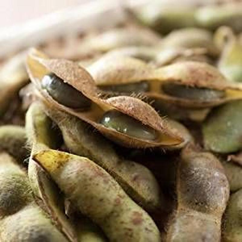 【10月限定】丹波たぶち農場黒枝豆2kg(さやのみ)【篠山市認定販売所】
