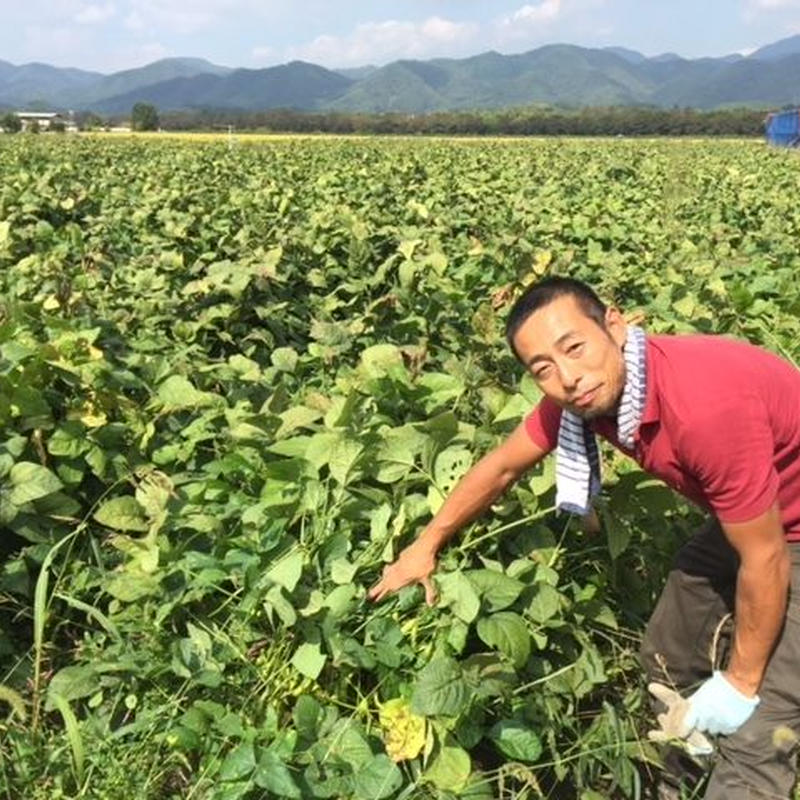 【10月限定】丹波ふたば農園の黒枝豆500g(さやのみ)【篠山市認定販売所】