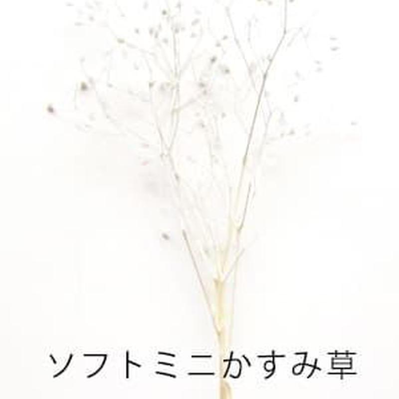 ソフトミニかすみ草