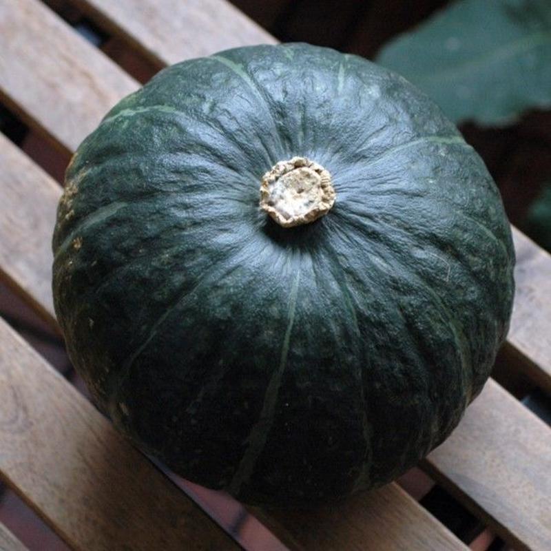 2018年秋野菜 生産者限定・有機JAS農産物  北海道/南幌産「かぼちゃ」品種:らいふく 3玉(5kg強)