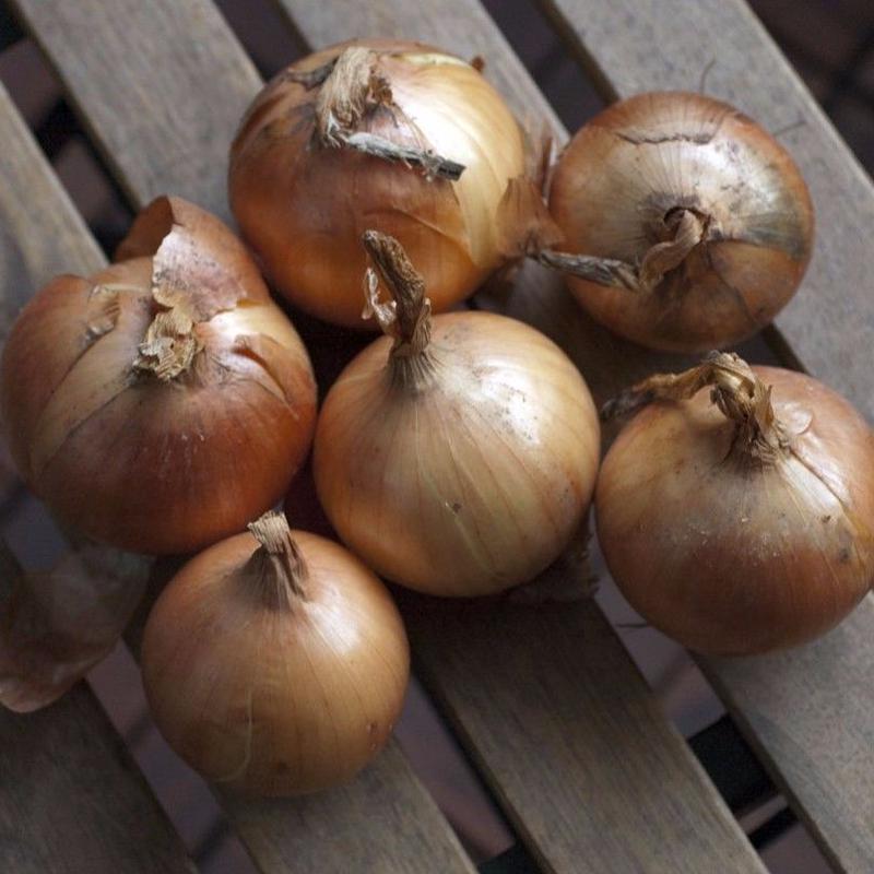 2018年秋野菜 生産者限定・有機JAS農産物  北海道/はるか農園「たまねぎ」品種:北はやて2号 5kg
